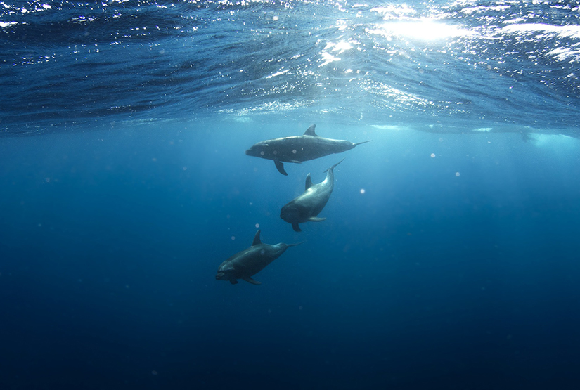 seminars-dolphins-mallorca
